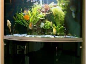Гнутое стекло для аквариума