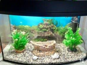 Гнутое стекло для аквариума толщиной 6 мм
